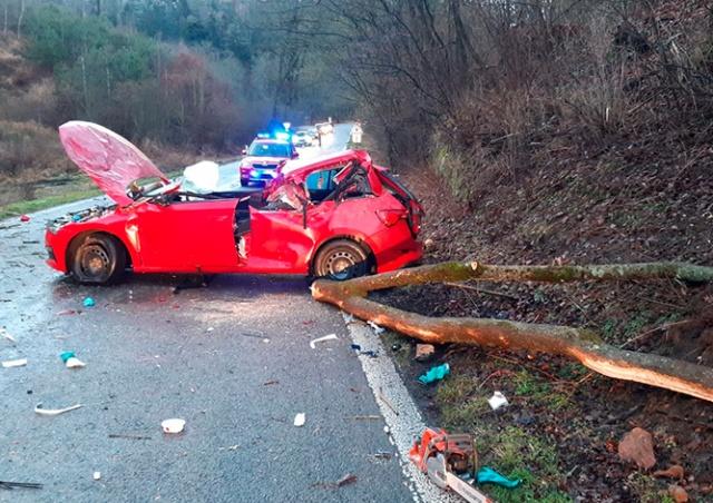 В Чехии на автомобиль упало дерево. Водитель погиб