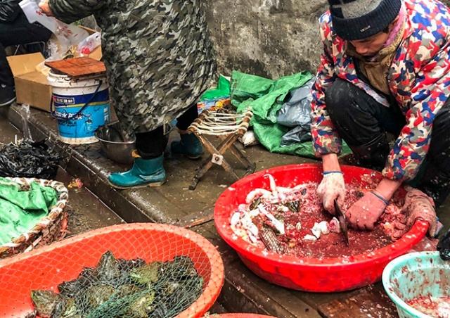 В Китае запретили продажу и употребление в пищу диких животных