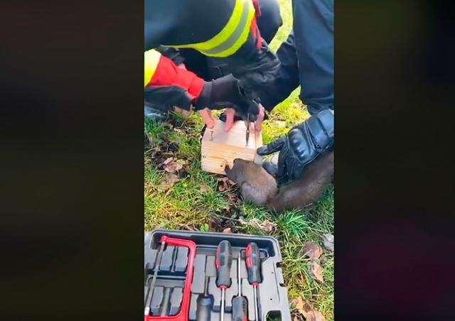 Пожарные спасли застрявшую в кормушке белку: видео