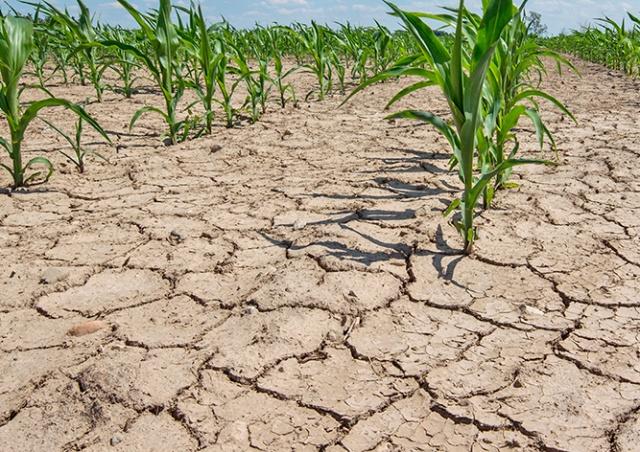 Чехия столкнулась с сильнейшей за 500 лет засухой