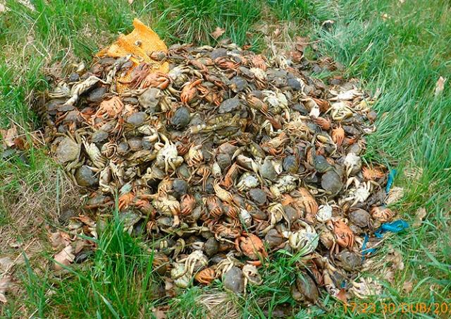 В Праге неизвестные выбросили у дороги 700 живых крабов