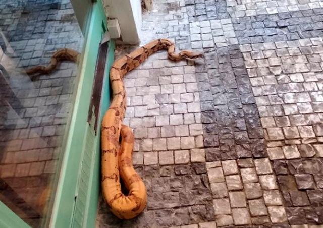 По улице в центре Праги ползала двухметровая змея