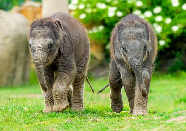 Новорожденным слонятам в Пражском зоопарке дали имена