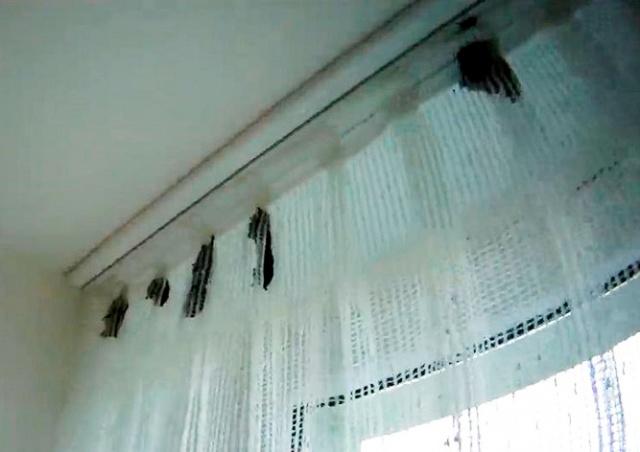К жительнице Чехии в квартиру забрались 70 летучих мышей: видео