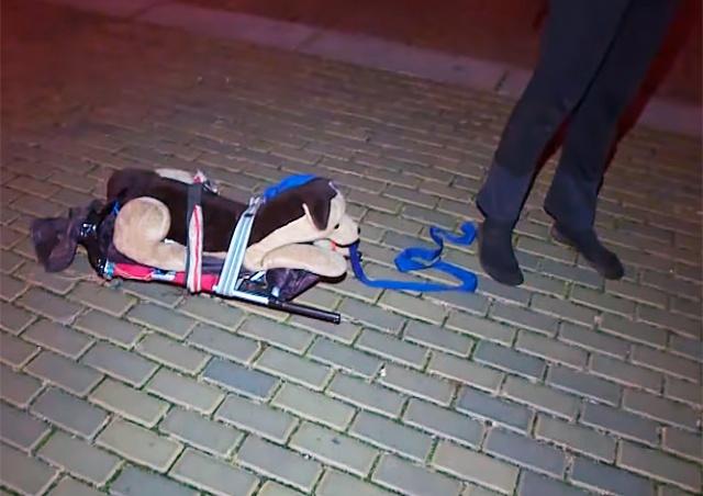 Житель Чехии выгуливал плюшевую собаку, чтобы обойти комендантский час