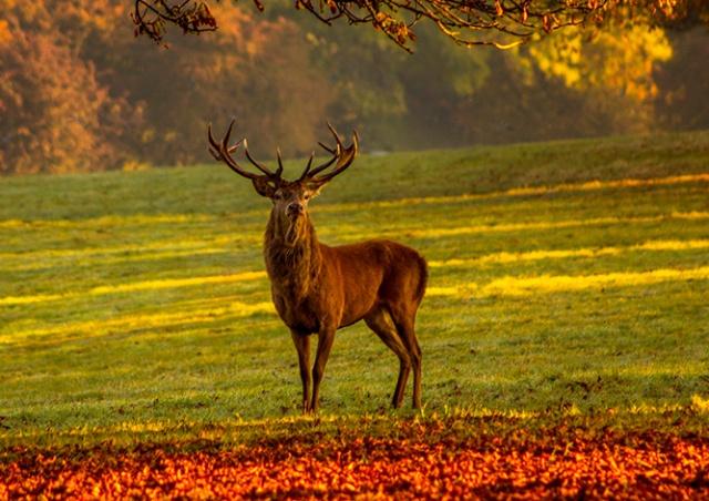 В Чехии олень отнял у охотника винтовку и убежал с ней в лес