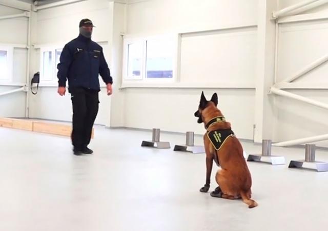 В Чехии начали дрессировать собак на выявление больных COVID-19