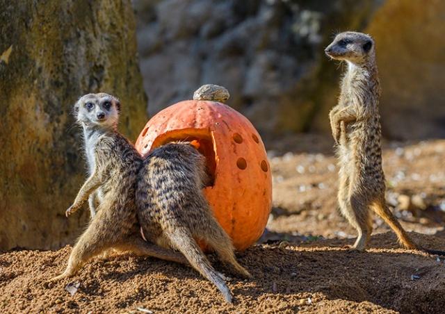 «Пражский зоопарк» опубликовал рейтинг самых популярных животных
