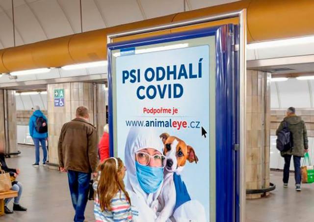 В Чехии собак научили определять COVID-19 по запаху: видео
