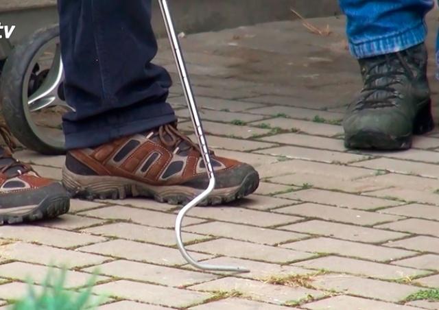 Поиски ядовитой змеи в пригороде Праги закончились ничем