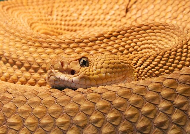 Под Прагой ядовитая змея укусила ребенка на улице