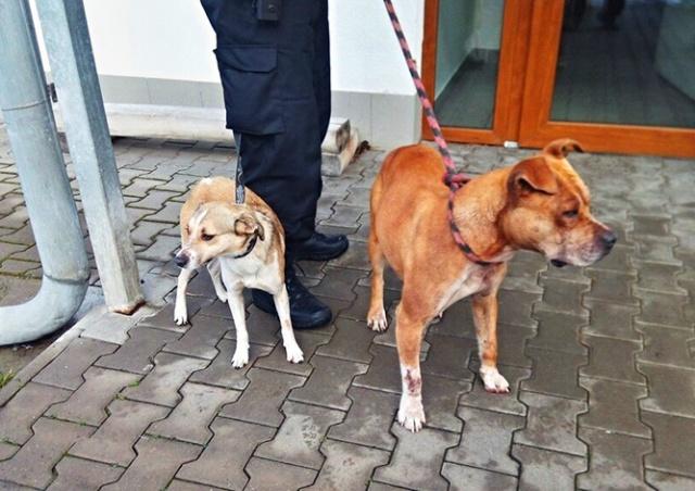 В Чехии собаки забежали в секс-шоп и отказались уходить. Вмешалась полиция