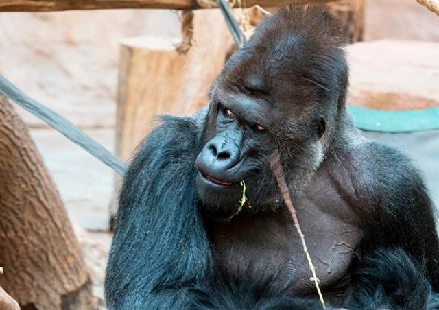 Коронавирусом заразились несколько животных в «Пражском зоопарке»