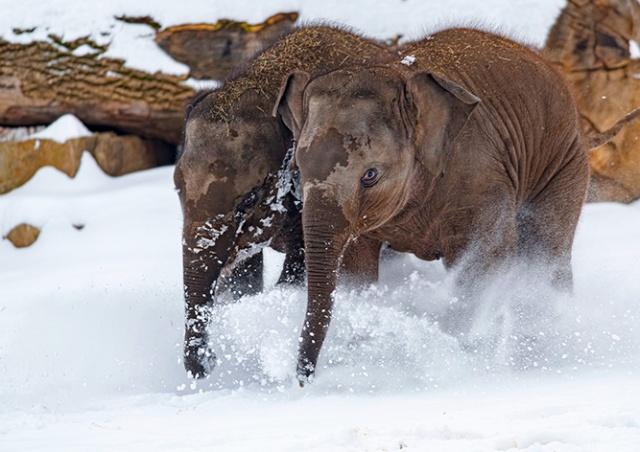 Как сейчас выглядит «Пражский зоопарк»: снежные фото