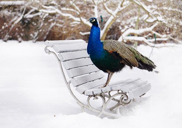 Тоже пражане: снежные фотографии городских животных