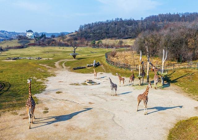 Пражский зоопарк открылся для посетителей