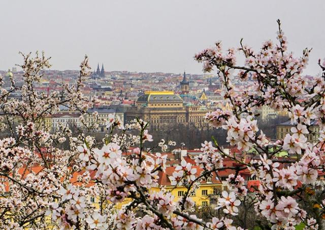 Прогулка по цветущей Праге: много красивых фото