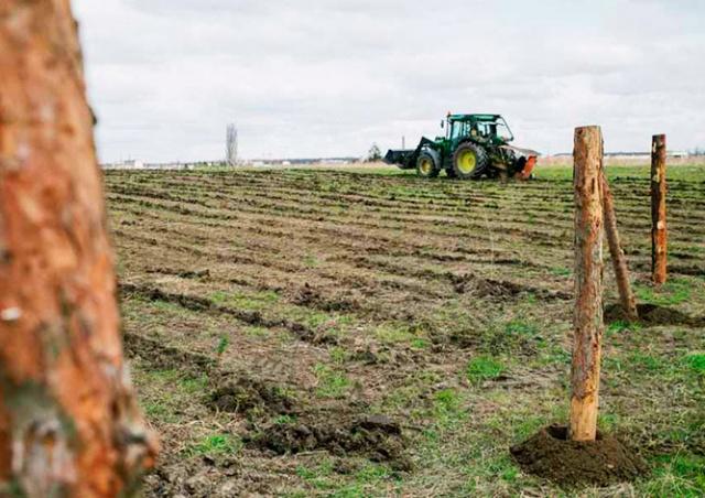 На востоке Праги высадят новый лес