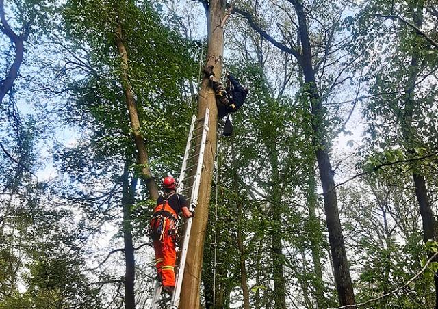 В Чехии орнитолог застрял на дереве во время работы. Пришлось вызывать пожарных