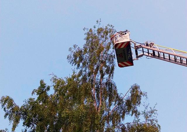 В Чехии пожарные сняли с 15-метровой березы попугая жако