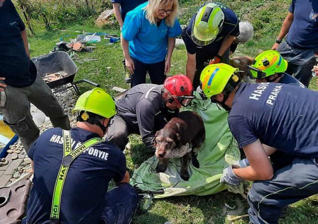 Из-под обломков разрушенного торнадо дома достали живую собаку