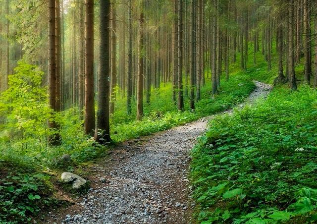 В Чехии в лесу нашли очень большую сумму денег. Полиция разыскивает владельца