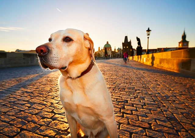 Статистика: сколько собак живет в Праге, самые популярные породы и клички