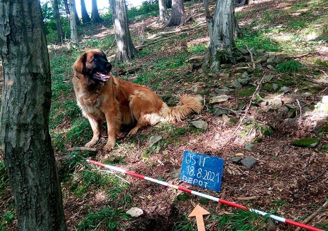 В Чехии собака случайно откопала в лесу клад