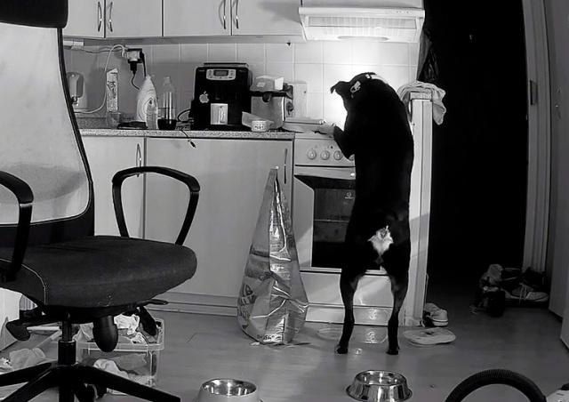 В Чехии собака случайно включила плиту и спровоцировала пожар: видео