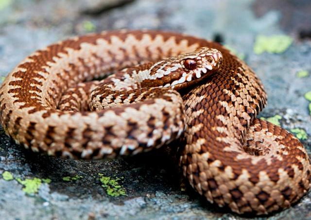 Туристка в чешских горах неправильно повела себя после укуса змеи