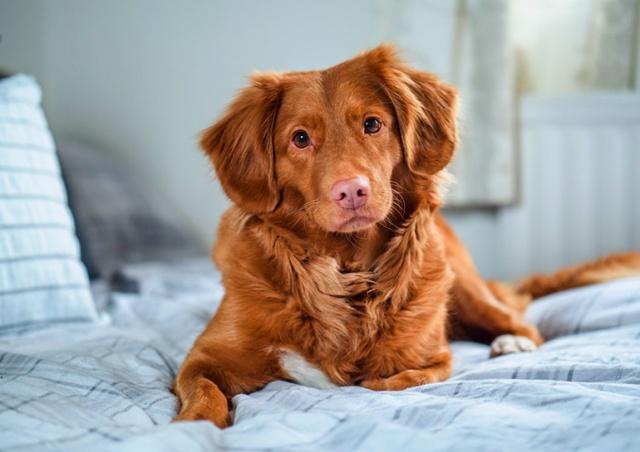 С нового года в Чехии запустят государственный реестр собак
