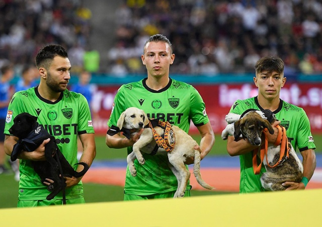 В Румынии футболисты вышли на поле с собаками из приюта, чтобы найти им новый дом