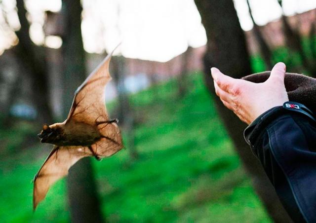 В пражском парке «Стромовка» выпустили летучих мышей