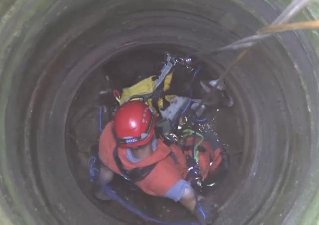 Козел упал в 10-метровый колодец у Праги