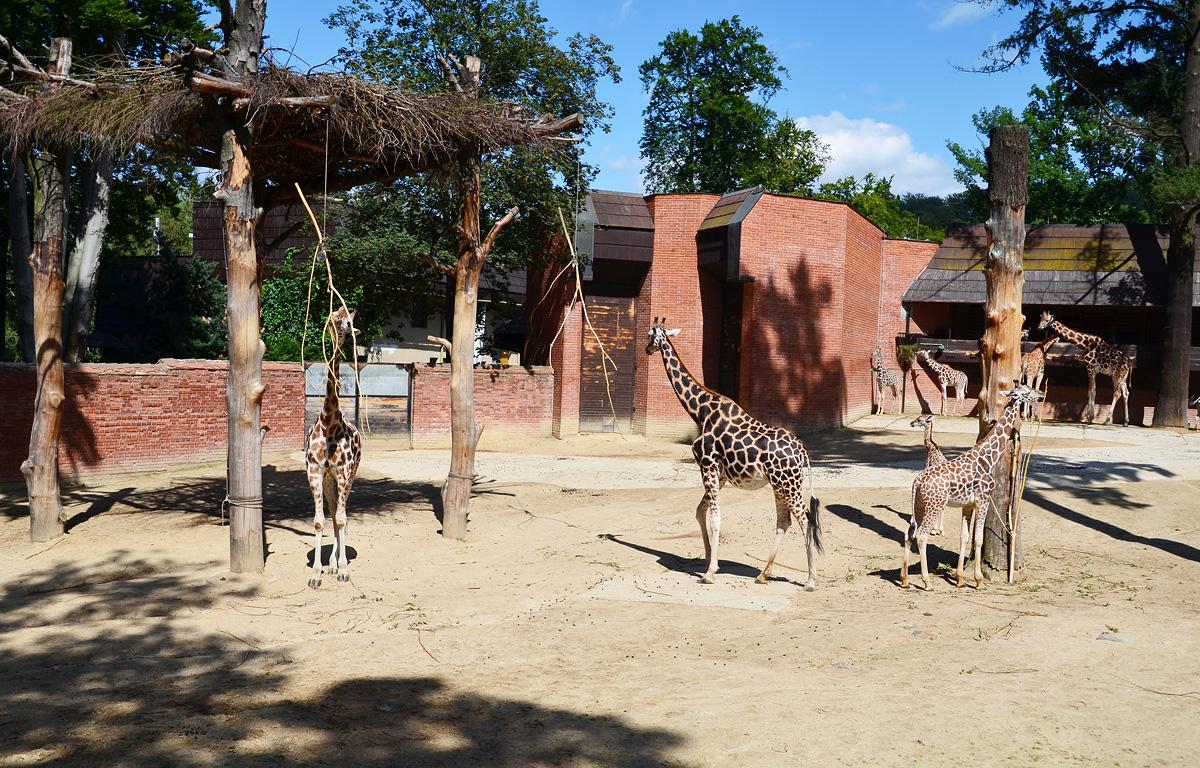 Либерецкий зоопарк Чехия