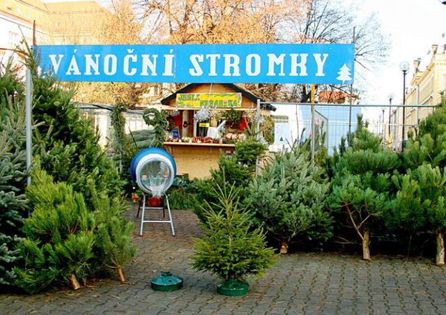 В Чехии из-за засухи подорожают рождественские ёлки