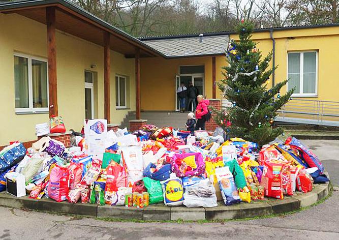 Бездомных собак в Рождество навестили 10 тыс. пражан