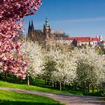 весна_ПРага_Пражский_Град