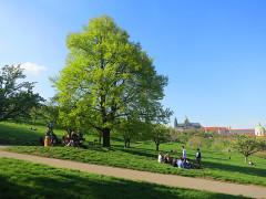 дерево-Прага-Пражский-град