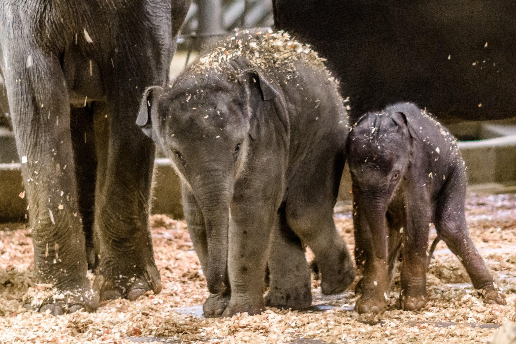 ВПражском зоопарке родился слоненок