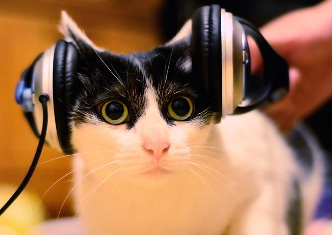 Размещен 1-ый вмире музыкальный альбом для кошек