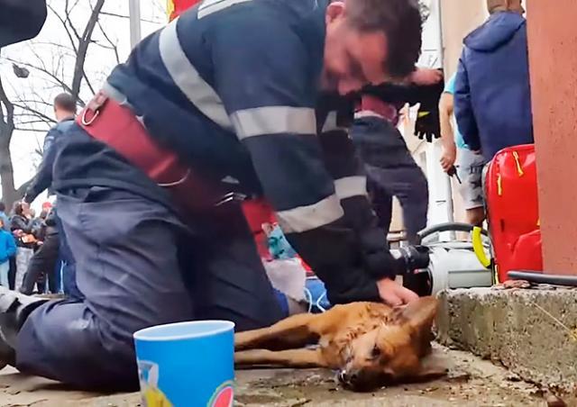 Видео: спасший собаку пожарный стал героем соцсетей