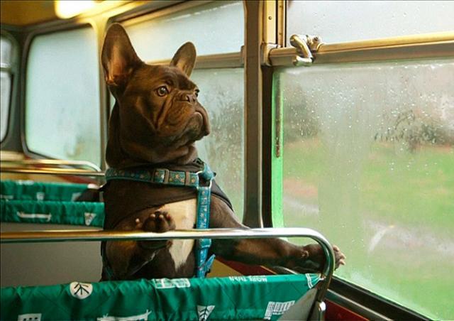 В Лондоне запустили первый в мире автобусный тур для собак