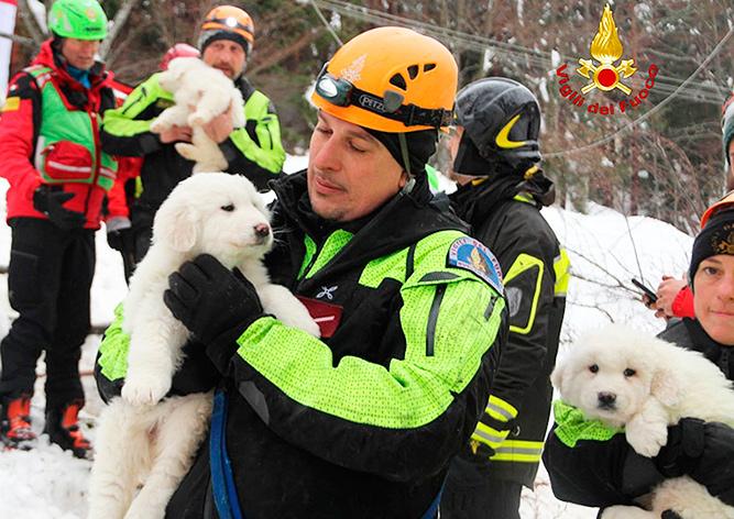 Из разрушенного лавиной отеля в Италии спасли трех щенков