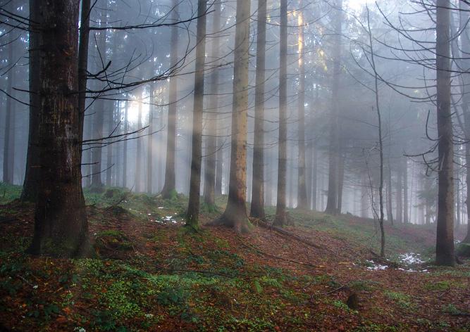 Чех наткнулся в лесу на средневековый клад