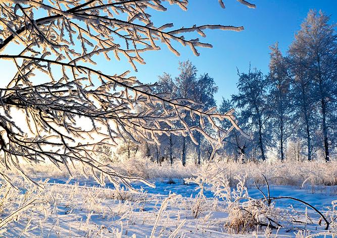 В Чехии зарегистрировали мороз в -34,6 °C