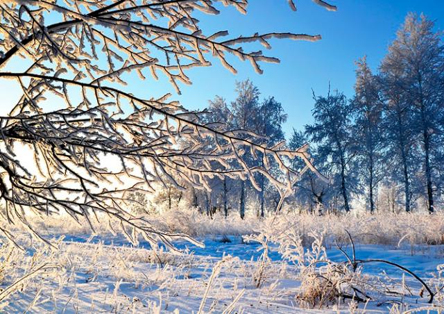 Синоптики: Чехию ждут солнечные и морозные выходные