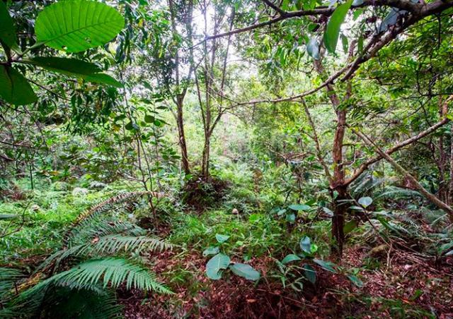 Фотозагадка: пользователи соцсетей ищут 12 гвардейцев в джунглях