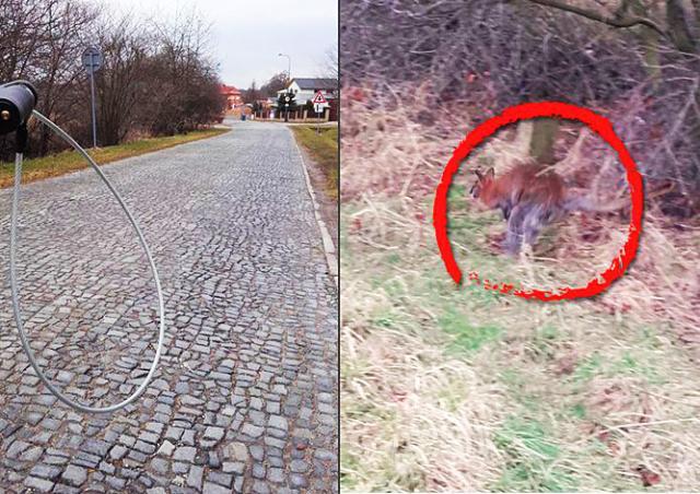 В Чехии кенгуру заставил побегать полицейских